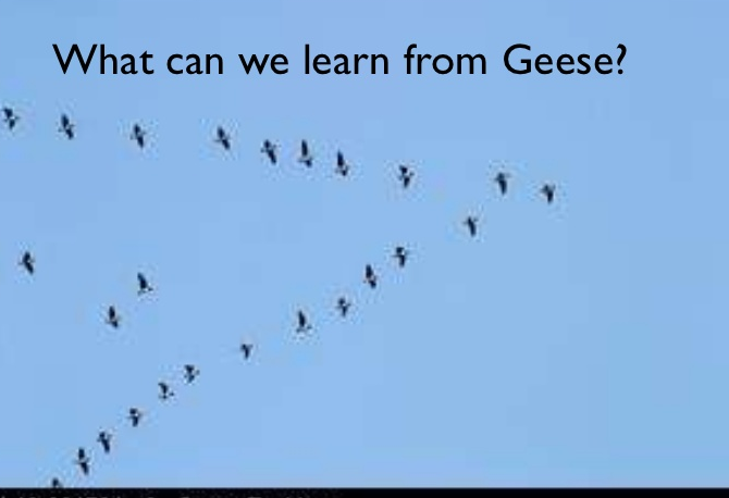 lessons from geese In kid-tested writing lessons, leslie shares 31 research-based lessons that  incorporate mentor texts in four clusters that reflect both key beliefs and.