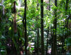 From Plantation Thinking to Rainforest Thinking