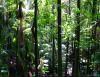 From Plantation Thinking to RainforestThinking