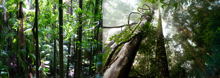 The lush rainforest; diverse, unpredictable, evolving, daunting, exciting.