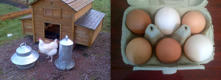 KEGS Eggs.  A student initiative...with a distinctive KEGS flavour!