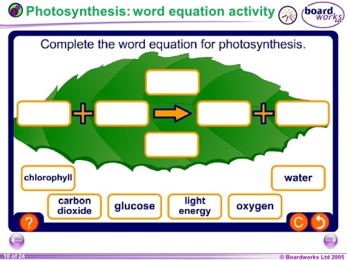 year-9-biology-topic-plants-and-photosynthesis-10-728