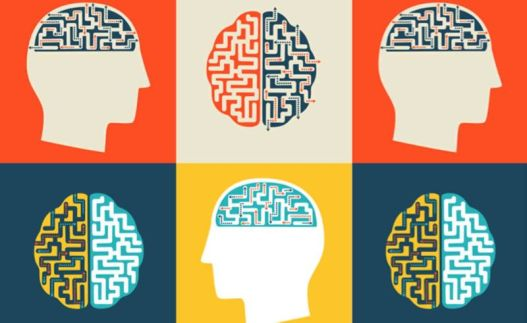 Brains-800x491.jpg